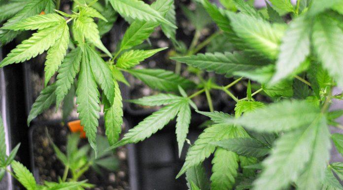 More Delays Plague Ohio's Medical Cannabis Program
