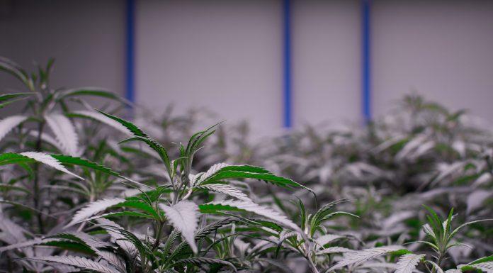 Denver Revokes All Licenses for Sweet Leaf Retailer