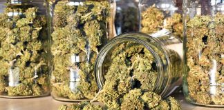 Oklahoma to Vote on Relaxing Rigid Medical Marijuana Regulations